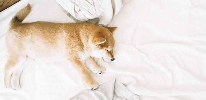 お昼寝する子犬