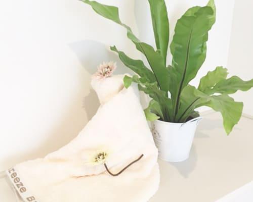 ブリーズブロンズのタオルと植物の写真