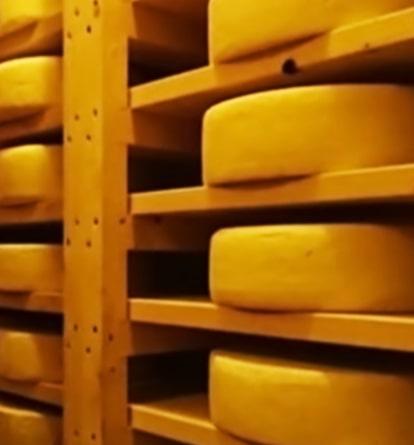 チーズ工房のチーズ