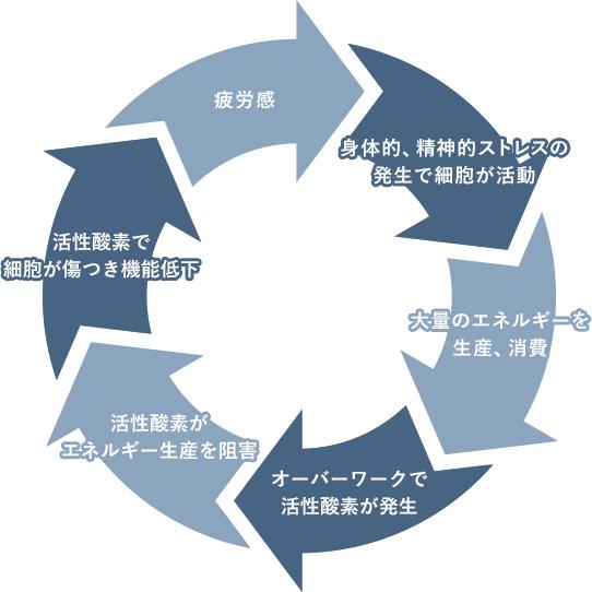 疲労のサイクル