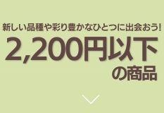 """""""2200円以下"""""""