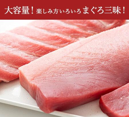 生本マグロ【M】セット:送料無料・即日発送