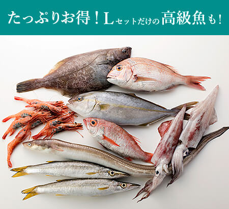 たっぷりお得!Lセットだけの高級魚もあり!「旬」のお魚セットL