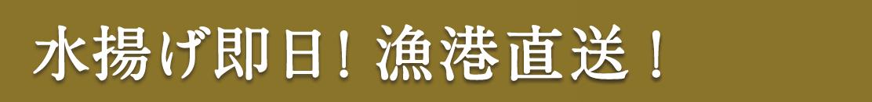 水揚げ即日!漁港直送!