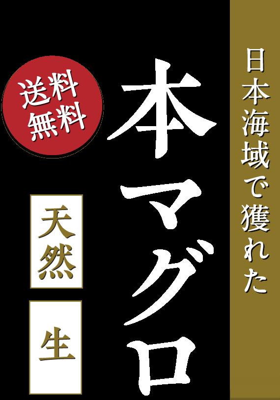 天然!生!日本海域で獲れた本マグロ【送料無料】