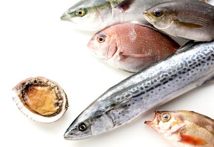 御来屋漁港で水揚げされた旬のお魚