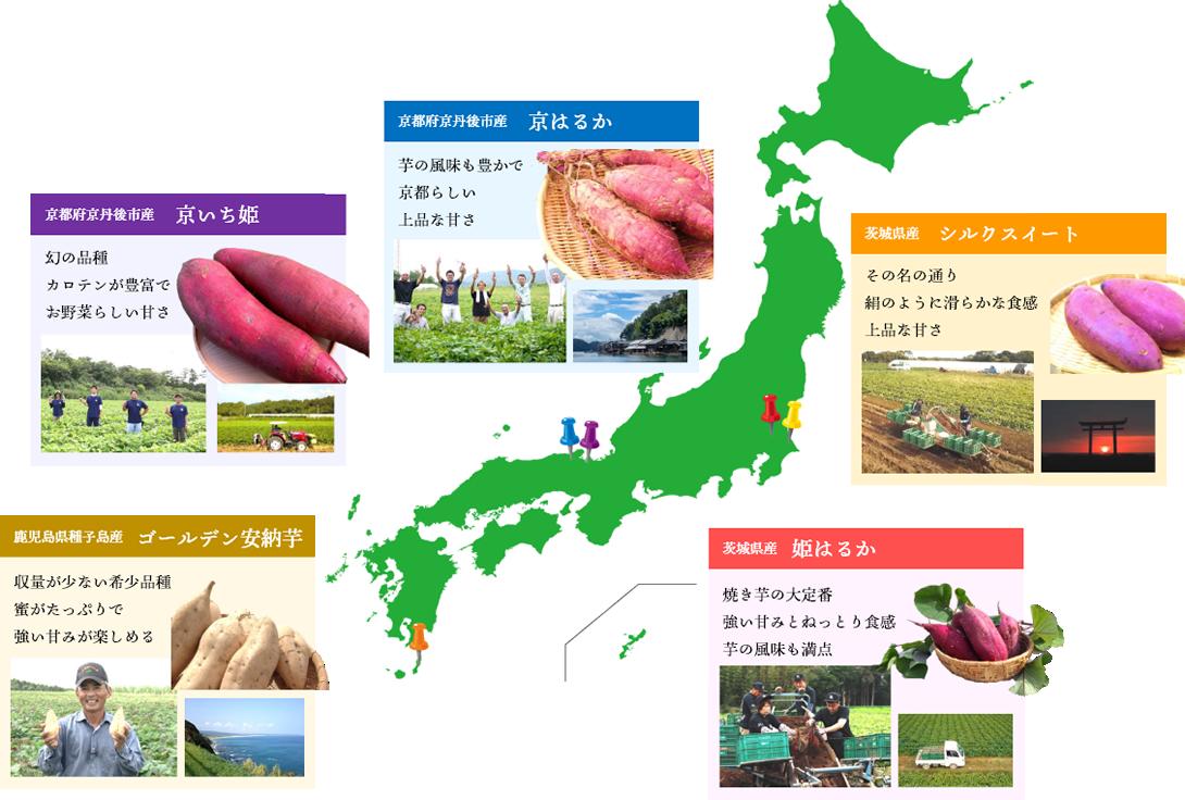 多品種の焼き芋の写真 京いち姫 京はるか、ゴールデン安納芋、シルクスイート、姫はるか