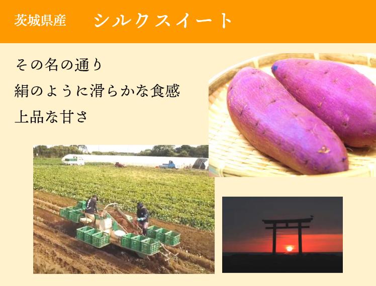 茨城県産 シルクスイート その名の通り絹のように滑らかな食感上品な甘さ