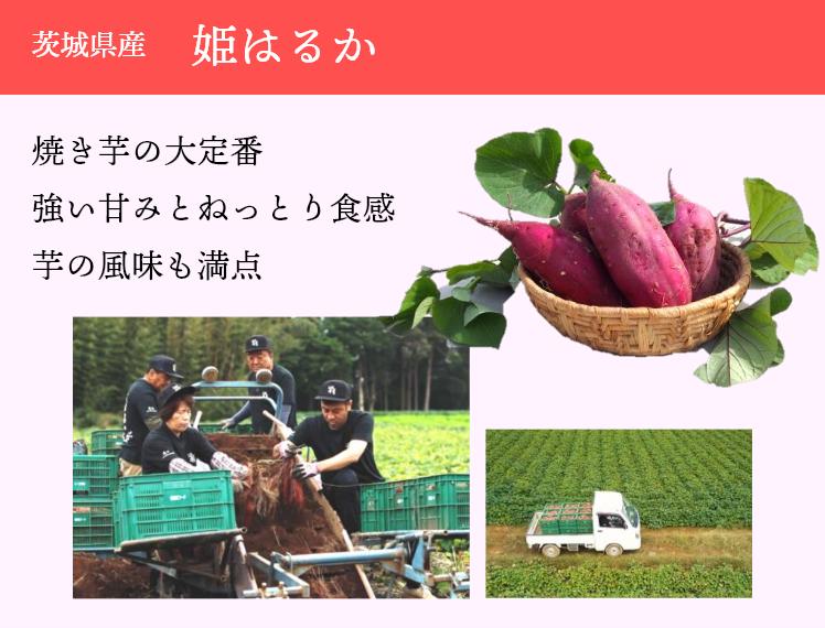 茨城県産 姫はるか 焼き芋の大定番強い甘みとねっとり食感芋の風味も満点