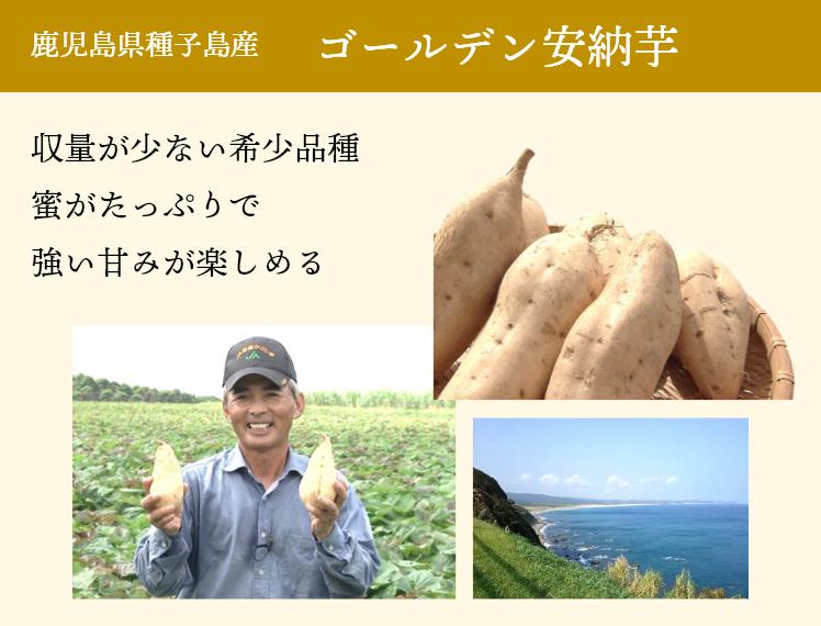 鹿児島県種子島産 ゴールデン安納芋  収量が少ない希少品種蜜がたっぷりで強い甘みが楽しめる