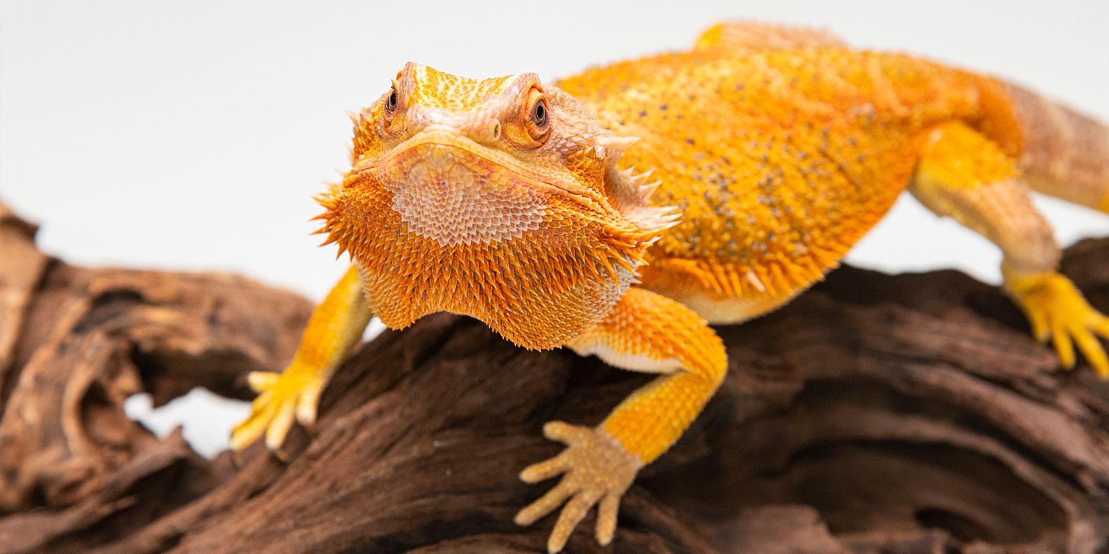 爬虫類は「命」であることを忘れないでほしいのです