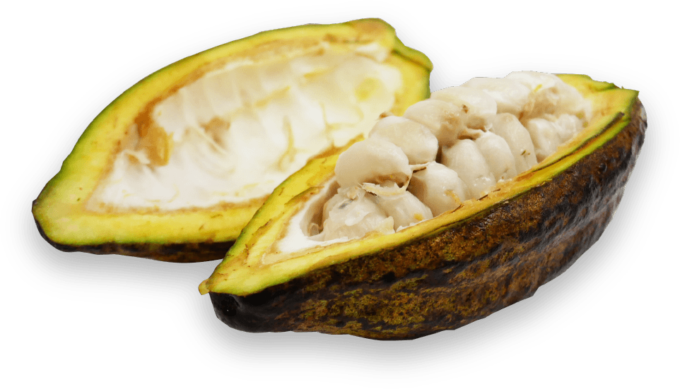 ABOUT CACAO PULP
