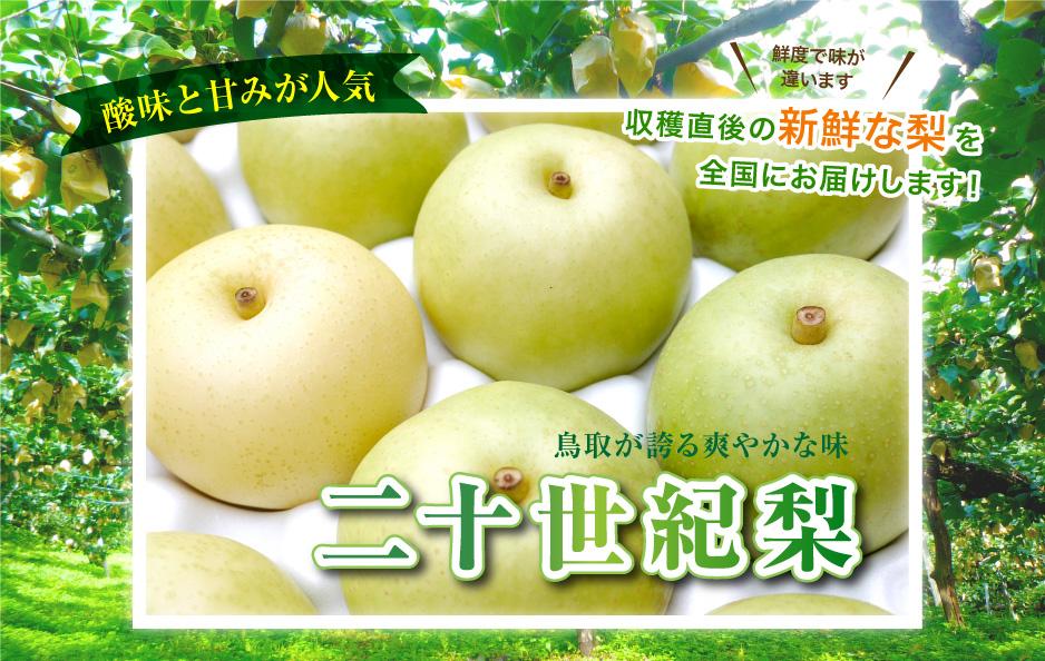 酸味と甘みが人気 収穫直後の新鮮な梨を全国にお届けします! 鮮度で味が違います 鳥取が誇る爽やかな味 二十世紀梨