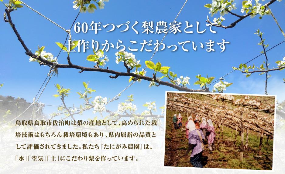 60年つづく梨農家として土作りからこだわっています 鳥取県鳥取市佐治町は梨の産地として、高められた栽培技術はもちろん栽培環境もあり、県内屈指の品質として評価されてきました。私たち『たにがみ農園』は、 「水」「空気」「土」にこだわり梨を作っています。