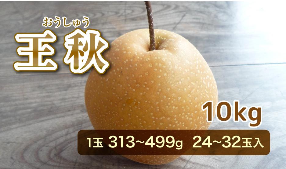 王秋(おうしゅう) 10kg 1玉 313から499g  24から32玉入