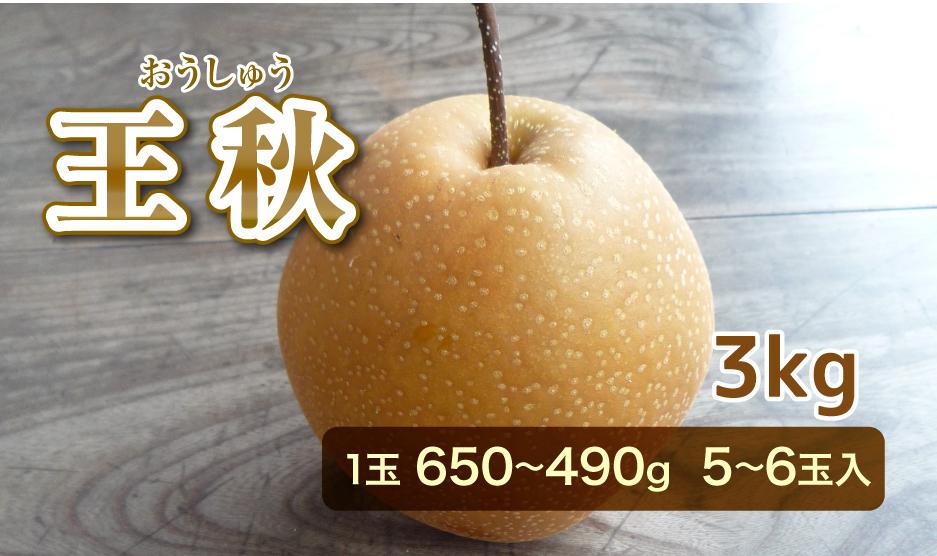 王秋(おうしゅう) 3kg 1玉 650から490g  5から6玉入