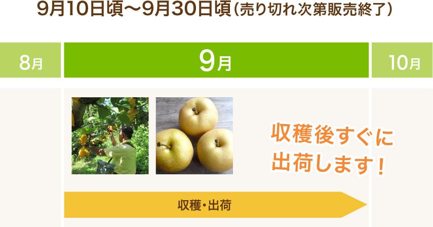 9月10日頃から9月30日頃(売り切れ次第販売終了) 収穫後すぐに出荷します!