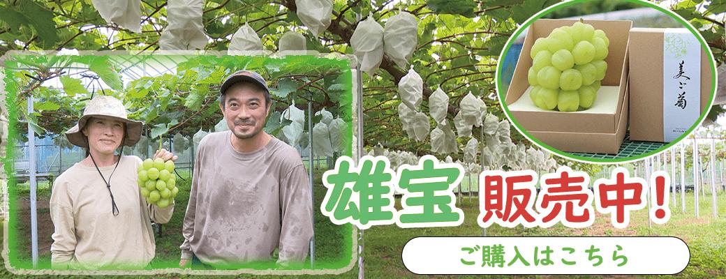 岡山県のこじま農園でじっくりと丁寧に栽培された雄宝を販売中!